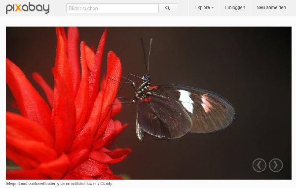 Pixabay - kostenlose Bilder im Netz